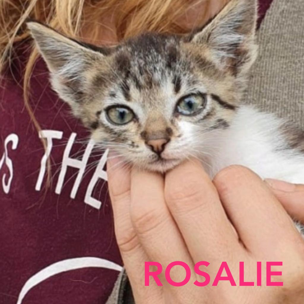 ROSALIE - Parrainée par Sandie (TR) Photoc31