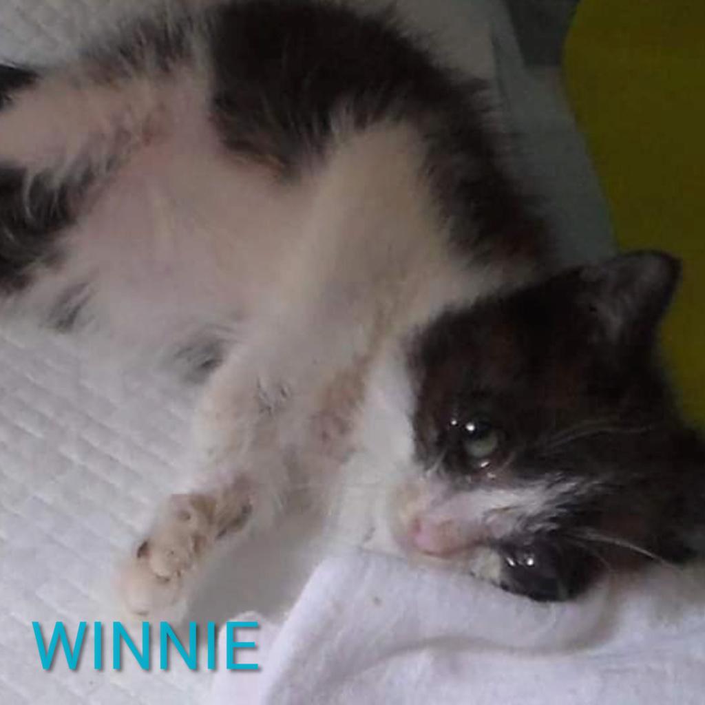 WINNIE - parrainé par Annie (EX) Photoc32