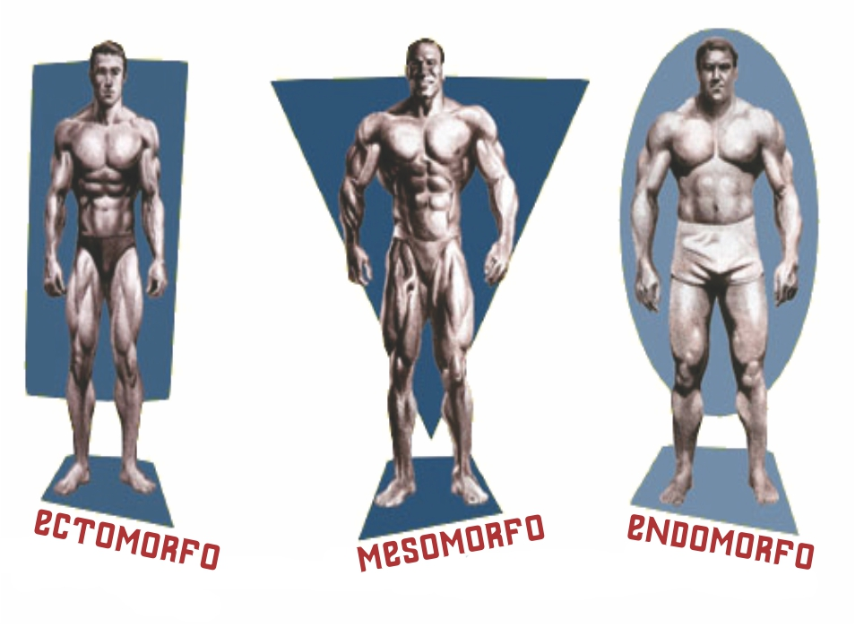 Ectomorfo, Mesomorfo ou Endomorfo - Descubra Seu Biotipo Corporal - Guia Completo Entre_77
