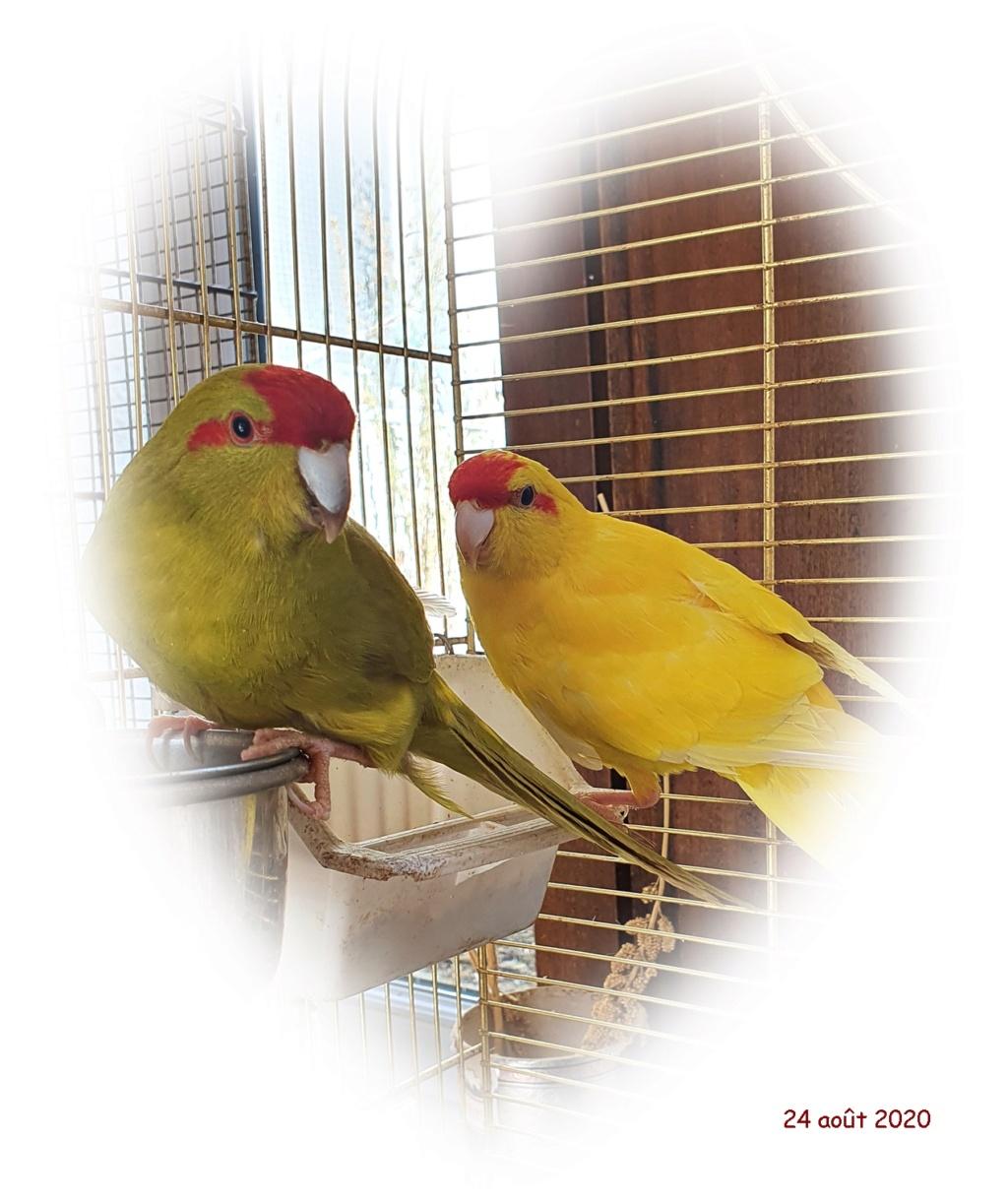 Bonjour Passionnés d'oiseaux depuis 25 ans Coeur10