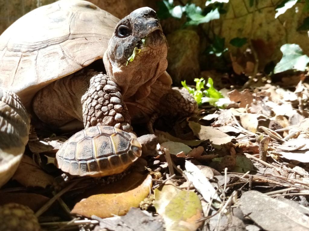 Jeune tortue yeux fermés  Img_2021