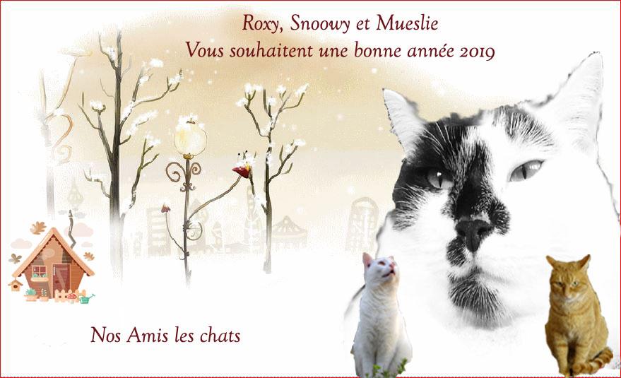 Nos Amis les Chats...
