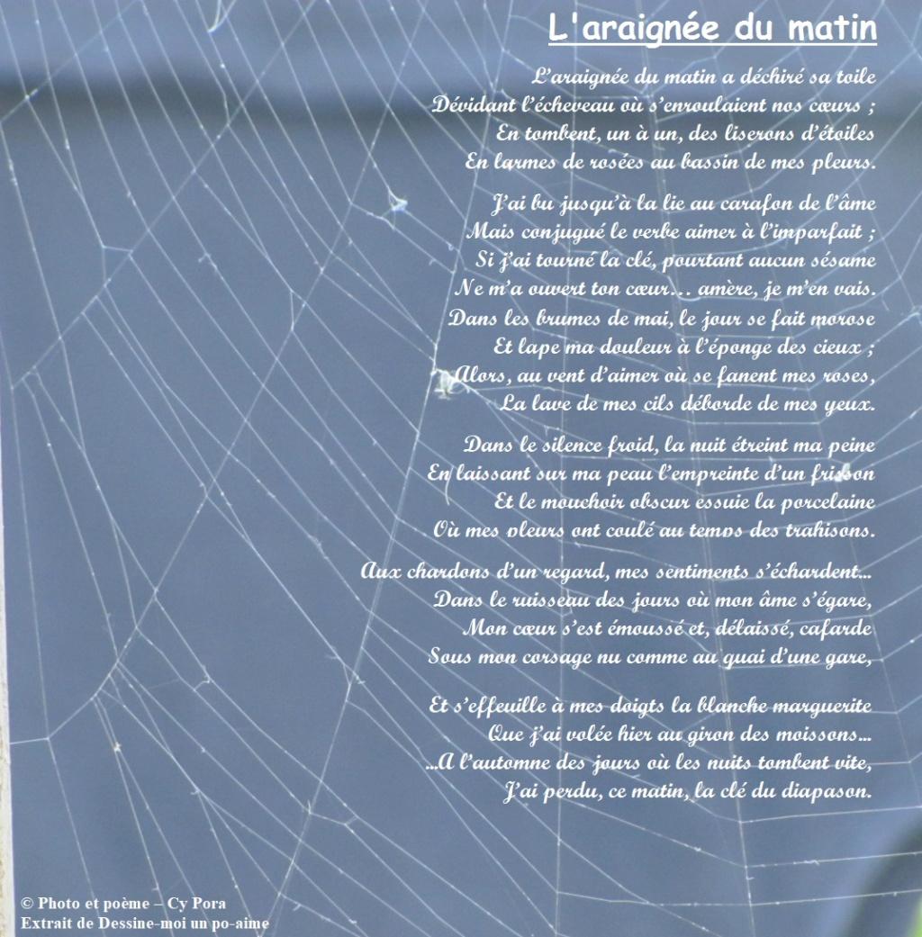 L'araignée du matin L_arai10
