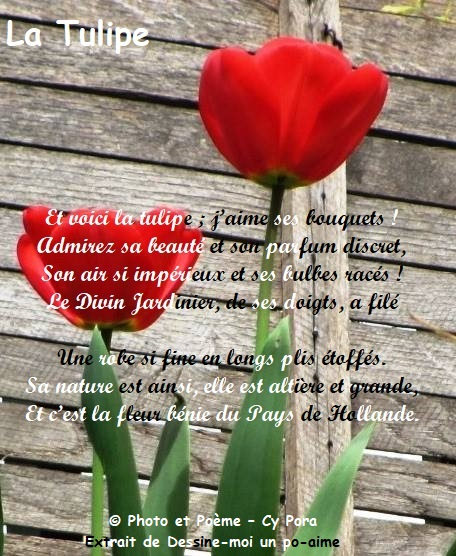 La tulipe La_tul10