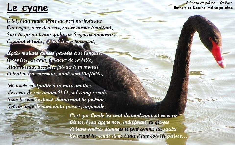 Le cygne Le_cyg10