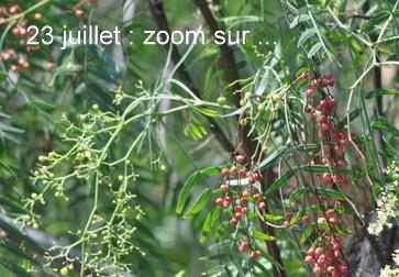"""23 juillet  """"en zoomant"""" 23_jui11"""