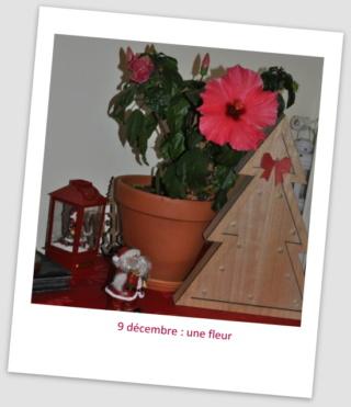 MF prépare Noël dans le Sud.... maj le 25/12 - Page 5 9_dzoc12