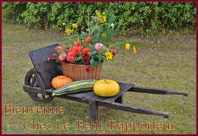 Le petit rapporteur