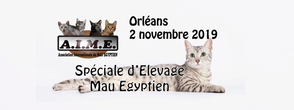 Spéciale d'Elevage Mau Egyptien d'Orléans - 2 novembre 2019 Aimesp10