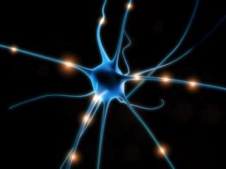 power point آناتومی (اعصاب سمپاتیک و پاراسمپاتیک جدار شکم) Neuron10