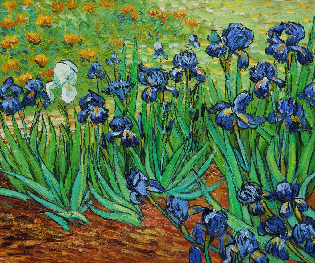 Joyeux anniversaire Cévennes Irises10