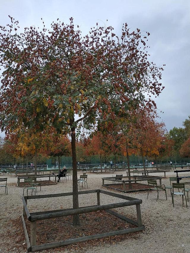 Choses vues dans le jardin du Luxembourg, à Paris - Page 6 1-thum12