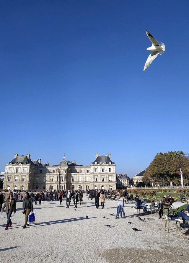 Choses vues dans le jardin du Luxembourg, à Paris - Page 7 1-thum13