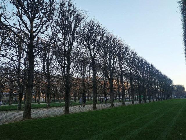 Choses vues dans le jardin du Luxembourg, à Paris - Page 8 Luxnov11