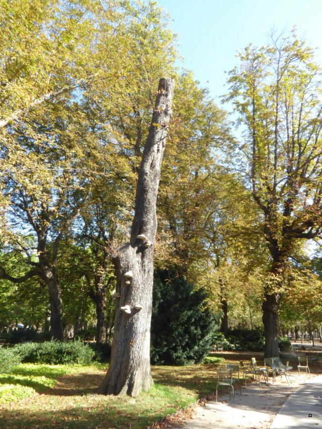 Choses vues dans le jardin du Luxembourg, à Paris - Page 8 P1050612