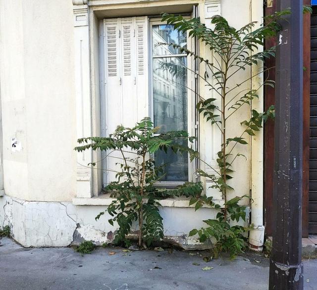 Les photos d'un jour... pas du jour - Page 24 Paris210