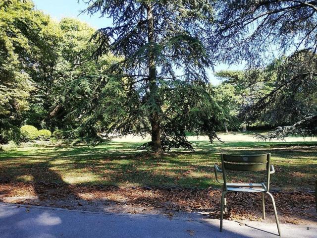 Choses vues dans le jardin du Luxembourg, à Paris - Page 8 Thumbn62