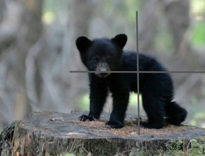 miré un ours - Page 3 308e2810