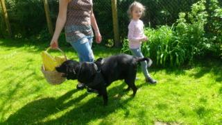 Owen, X labrador d'environ 3 ans  Sam_0110