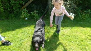 Owen, X labrador d'environ 3 ans  Sam_0112
