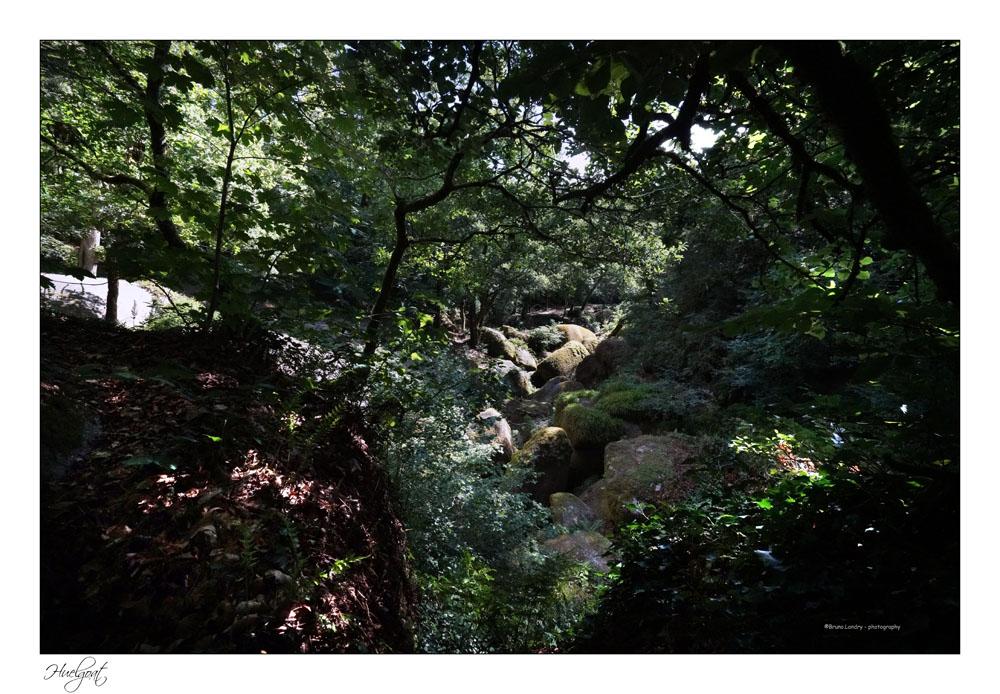 Balade dans la forêt de l'Helgouat 7r204721