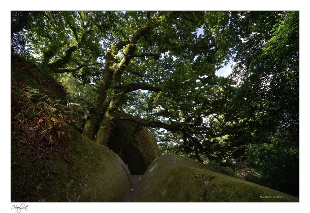 Balade dans la forêt de l'Helgouat 7r204723