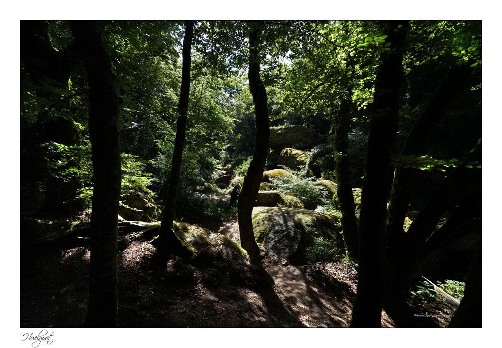 Balade dans la forêt de l'Helgouat 7r204724