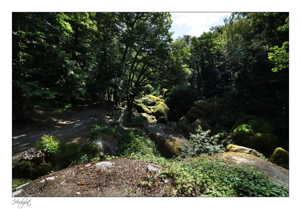 Balade dans la forêt de l'Helgouat 7r204725