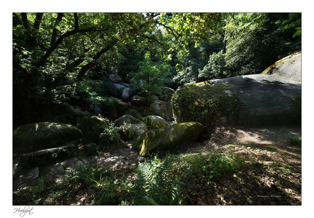 Balade dans la forêt de l'Helgouat 7r204726