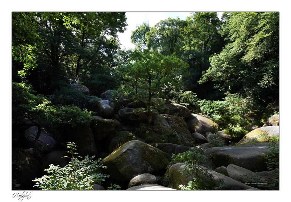 Balade dans la forêt de l'Helgouat 7r204727
