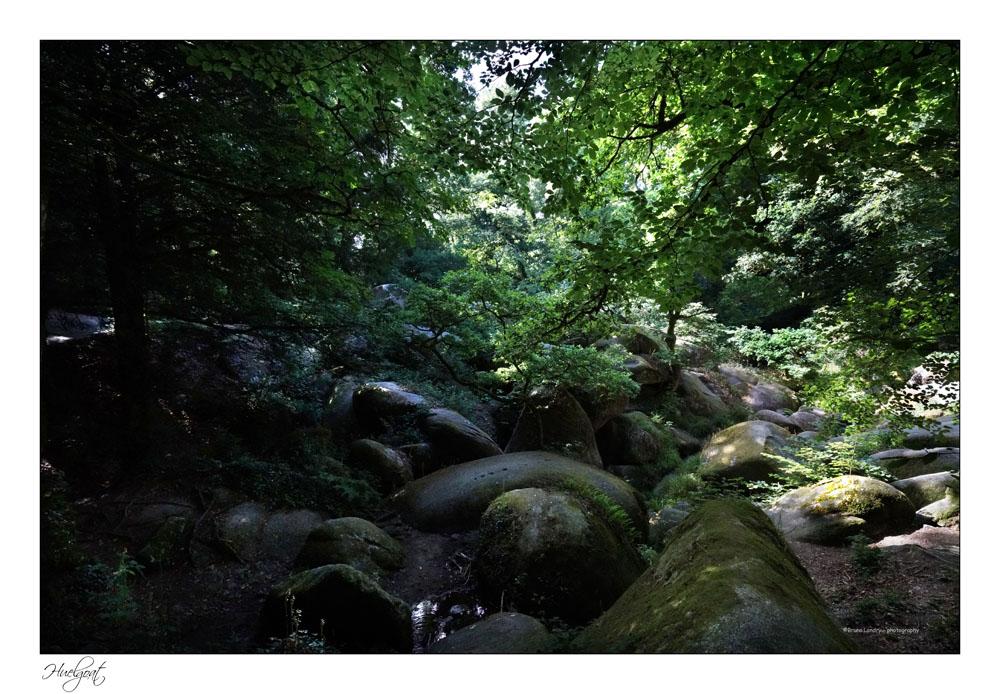Balade dans la forêt de l'Helgouat 7r204728