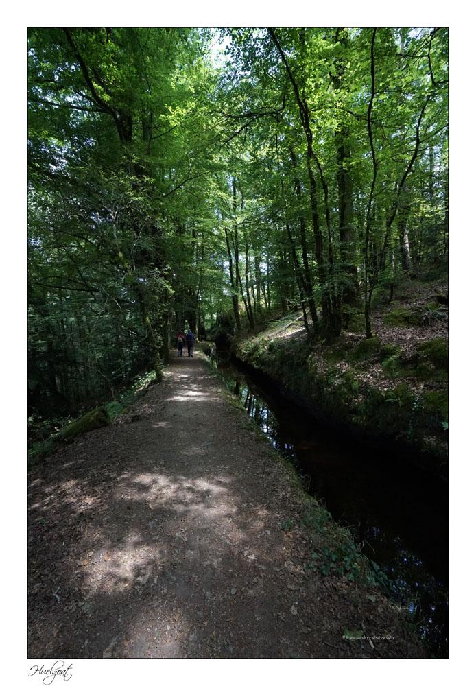 Balade dans la forêt de l'Helgouat 7r204737