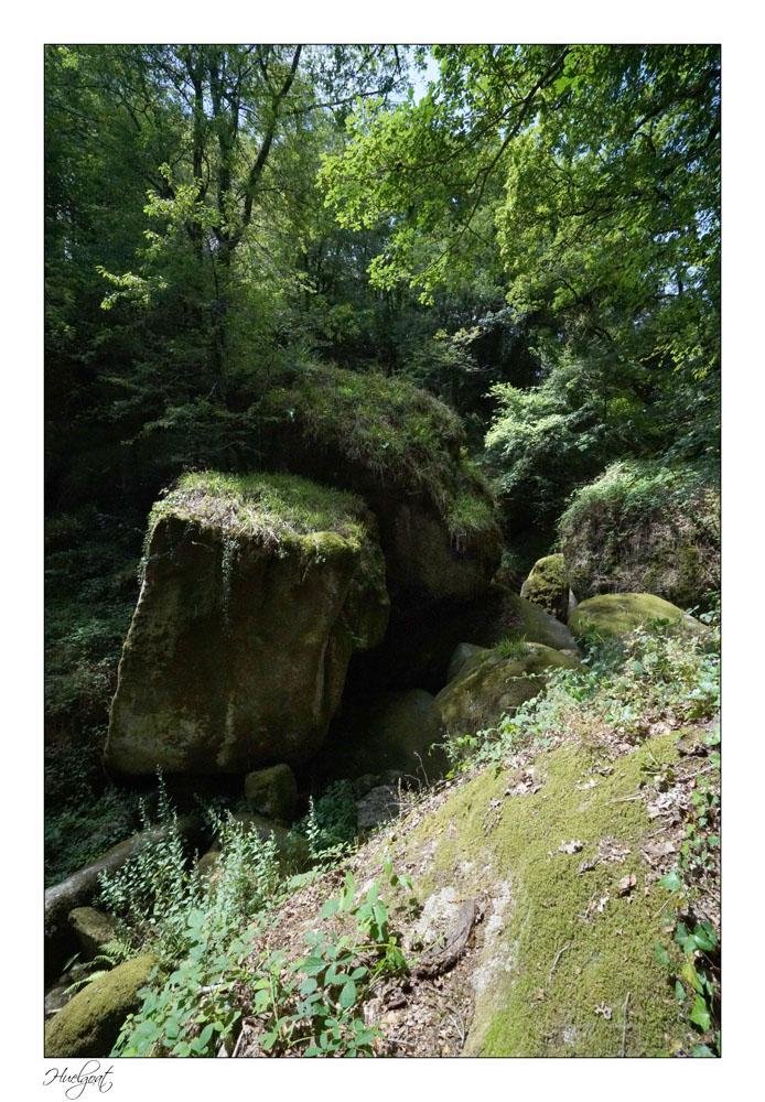 Balade dans la forêt de l'Helgouat 7r204738
