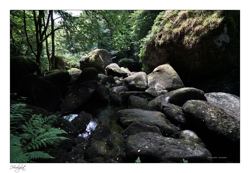 Balade dans la forêt de l'Helgouat 7r204740