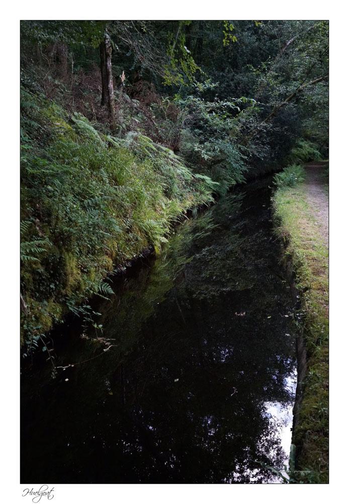Balade dans la forêt de l'Helgouat 7r204742