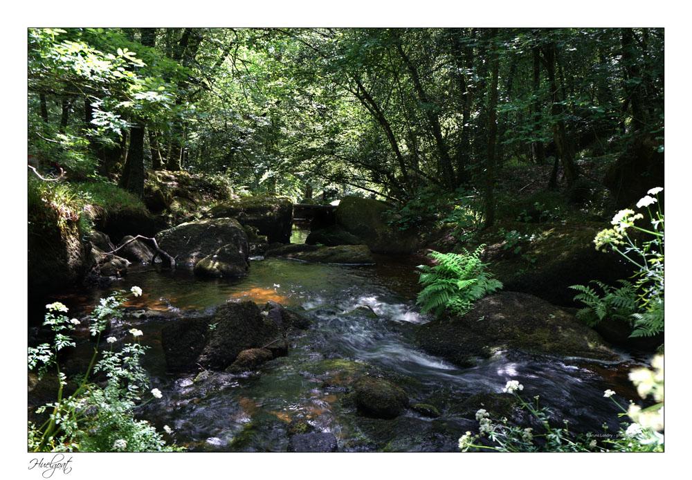 Balade dans la forêt de l'Helgouat 7r204743