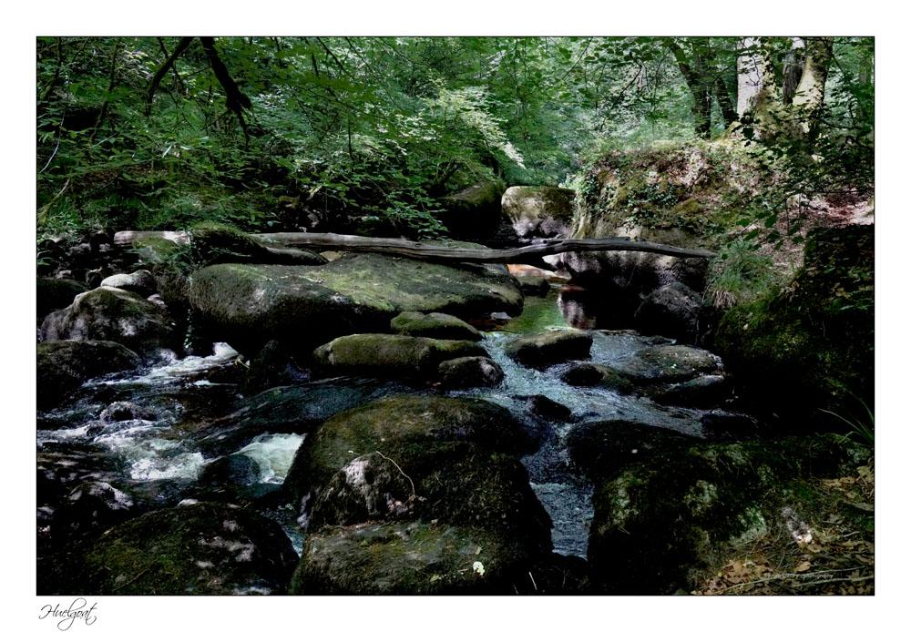 Balade dans la forêt de l'Helgouat 7r204744