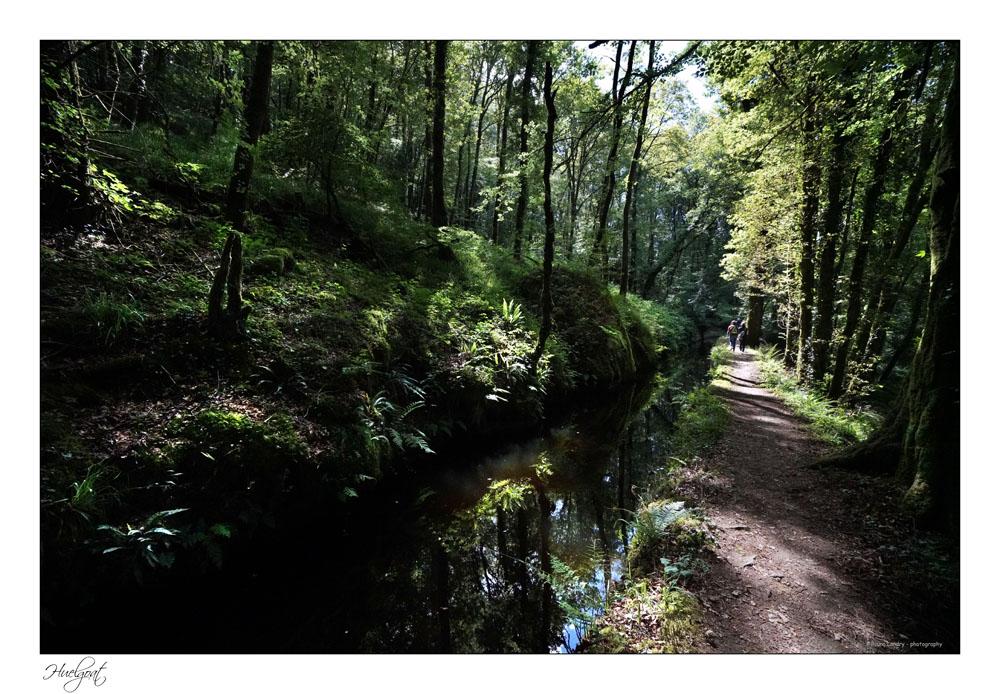 Balade dans la forêt de l'Helgouat 7r204747