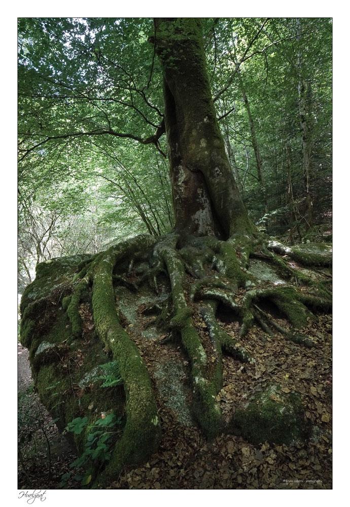 Balade dans la forêt de l'Helgouat 7r204748