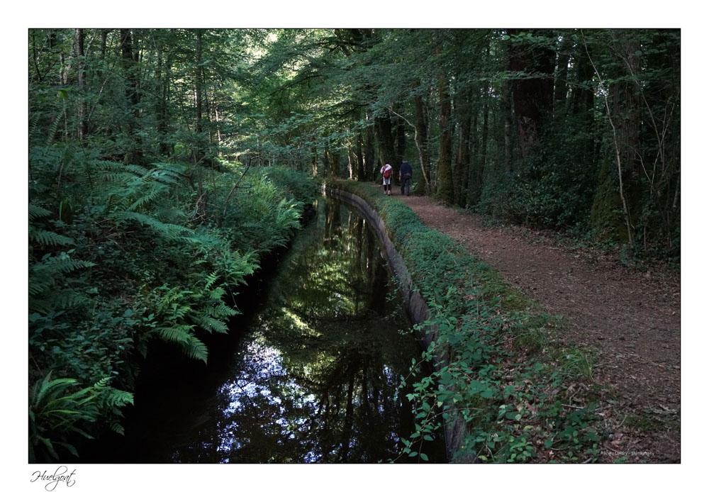 Balade dans la forêt de l'Helgouat 7r204749