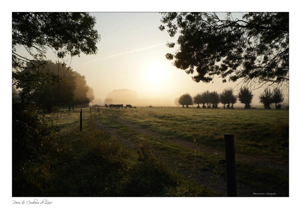 Brumes de Loire (fil) - Page 19 7r204817