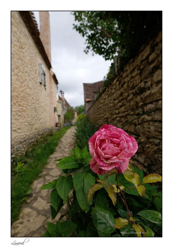 [Fil Ouvert] Fleurs - Page 22 Dscf6611