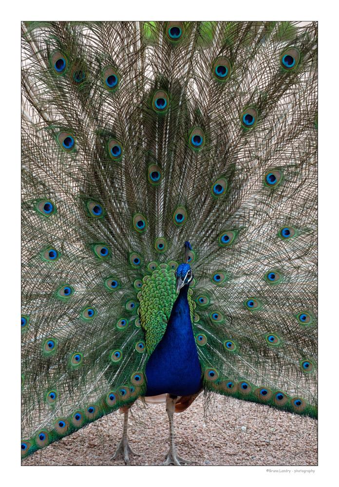 [Ouvert] FIL - Oiseaux. - Page 14 Dscf7310