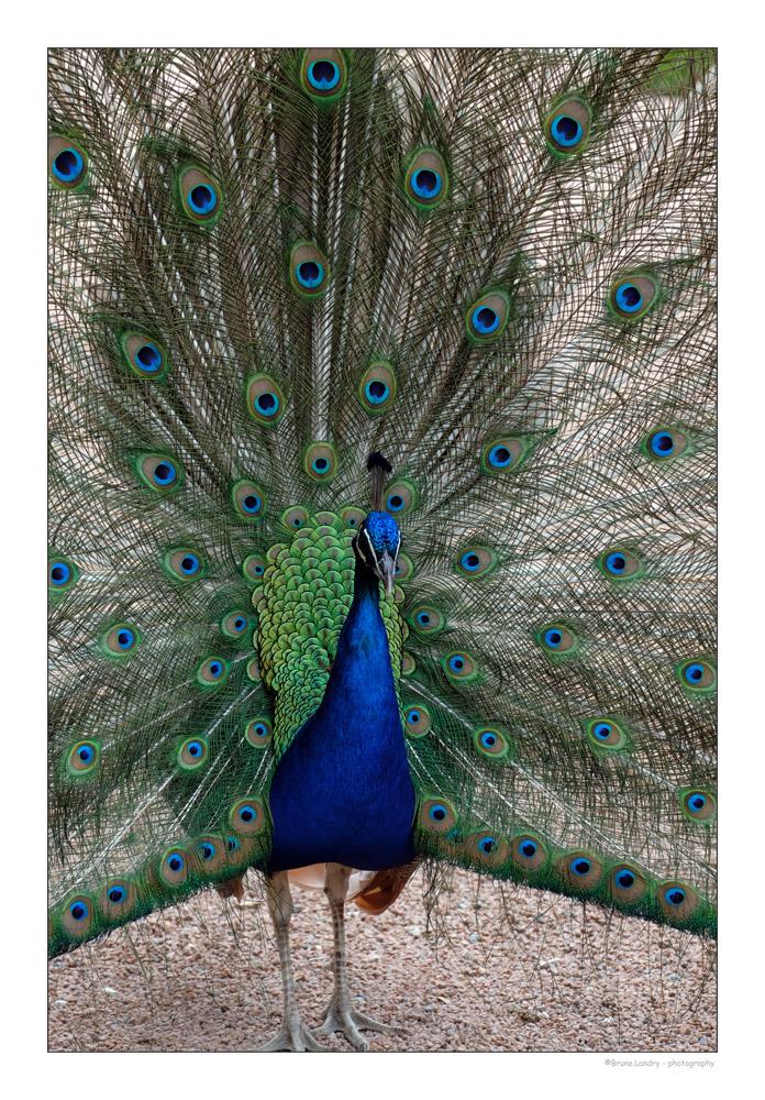 [Ouvert] FIL - Oiseaux. - Page 14 Dscf7311