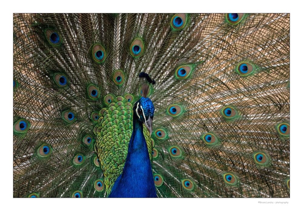 [Ouvert] FIL - Oiseaux. - Page 14 Dscf7312