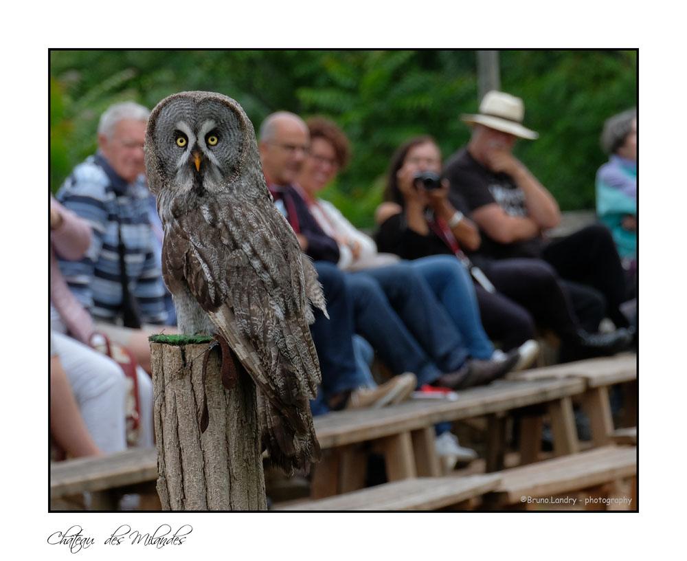 [Ouvert] FIL - Oiseaux. - Page 14 Dscf7411