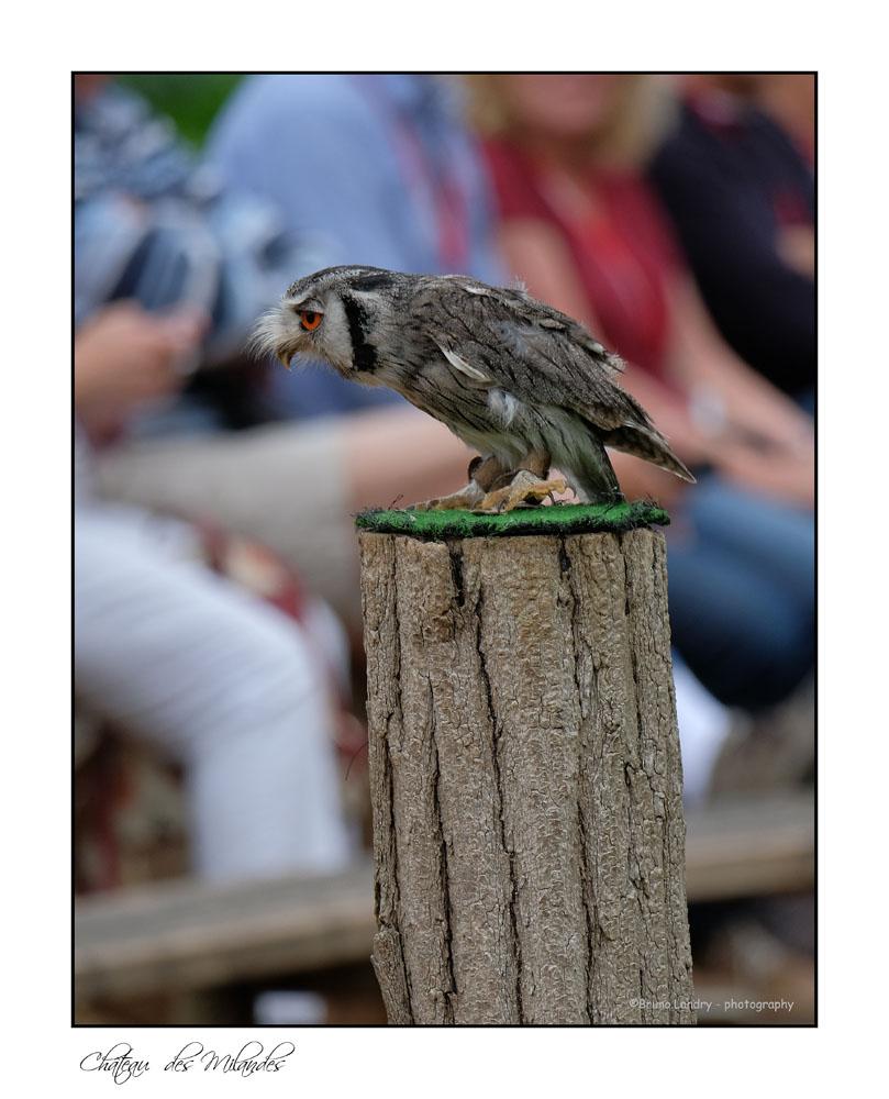 [Ouvert] FIL - Oiseaux. - Page 14 Dscf7412