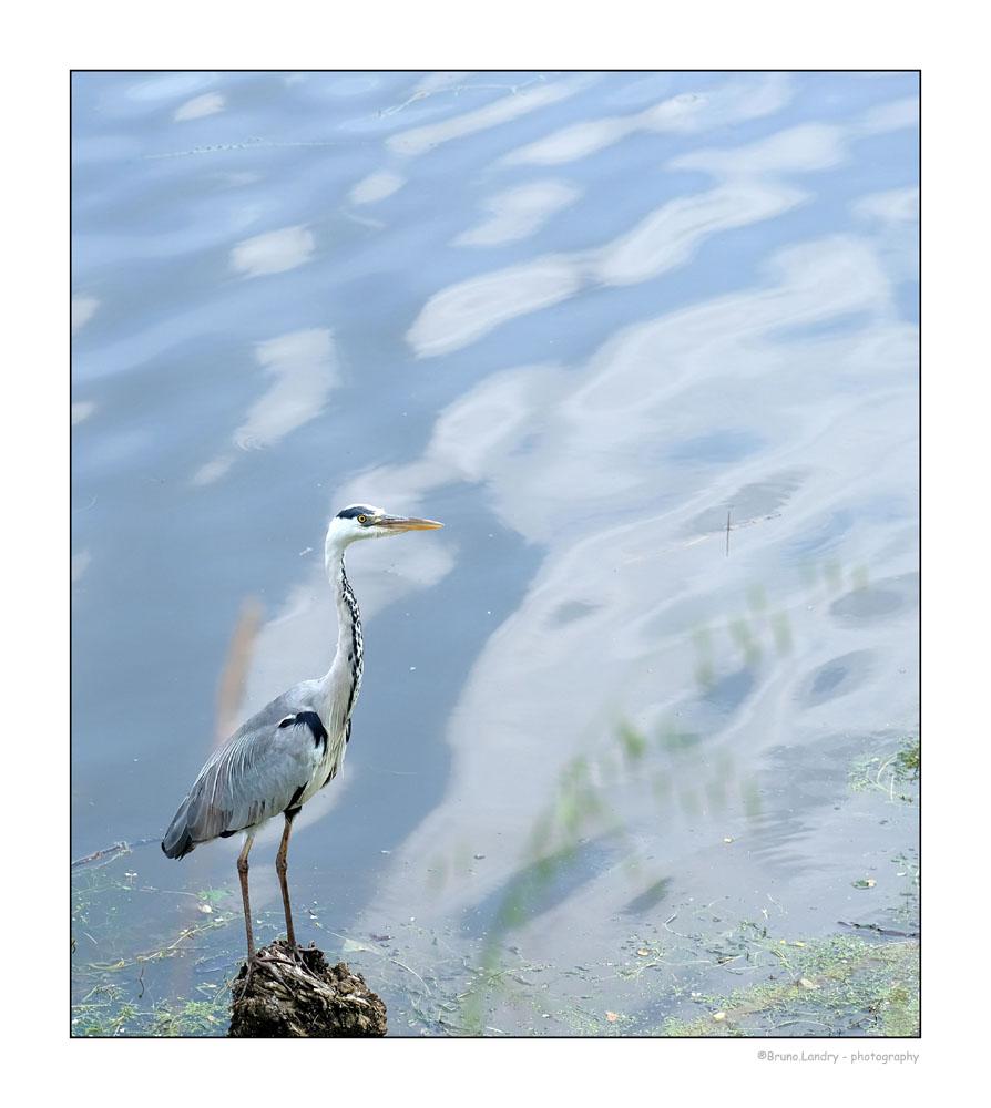[Ouvert] FIL - Oiseaux. - Page 14 Dscf7413