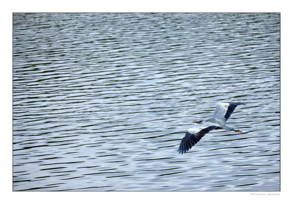 [Ouvert] FIL - Oiseaux. - Page 14 Dscf7415
