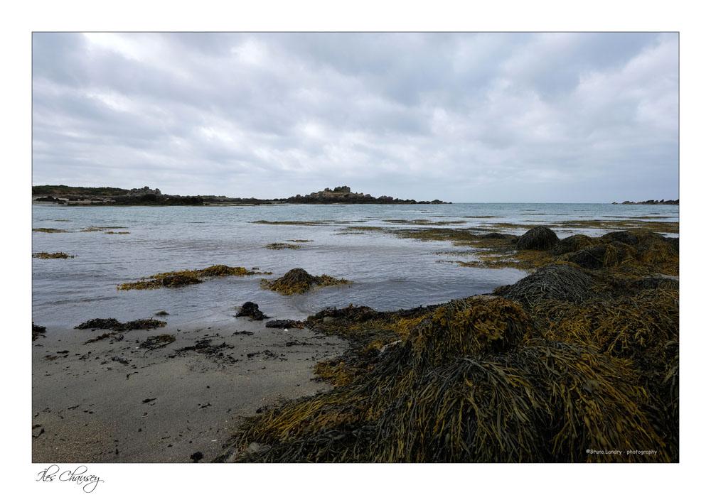 îles Chausey Dscf8118